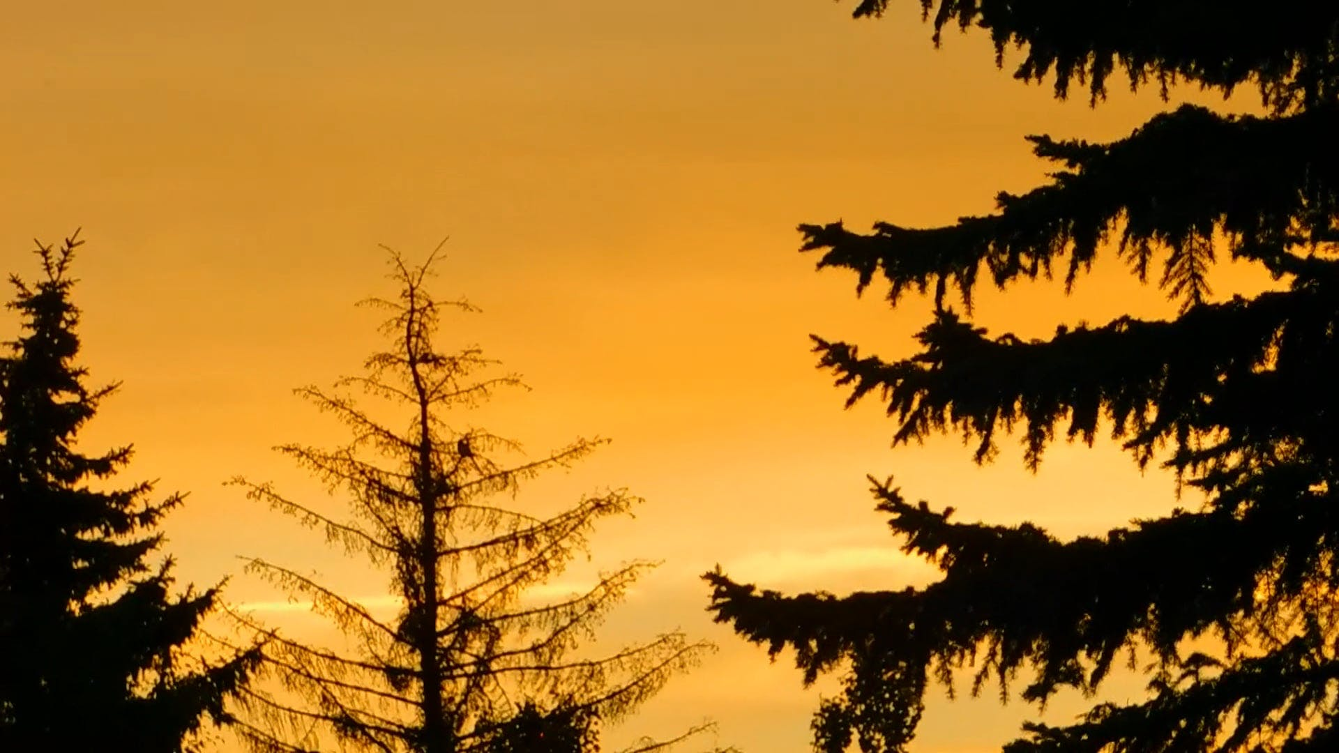Silhouette Of Trees At Sunrise