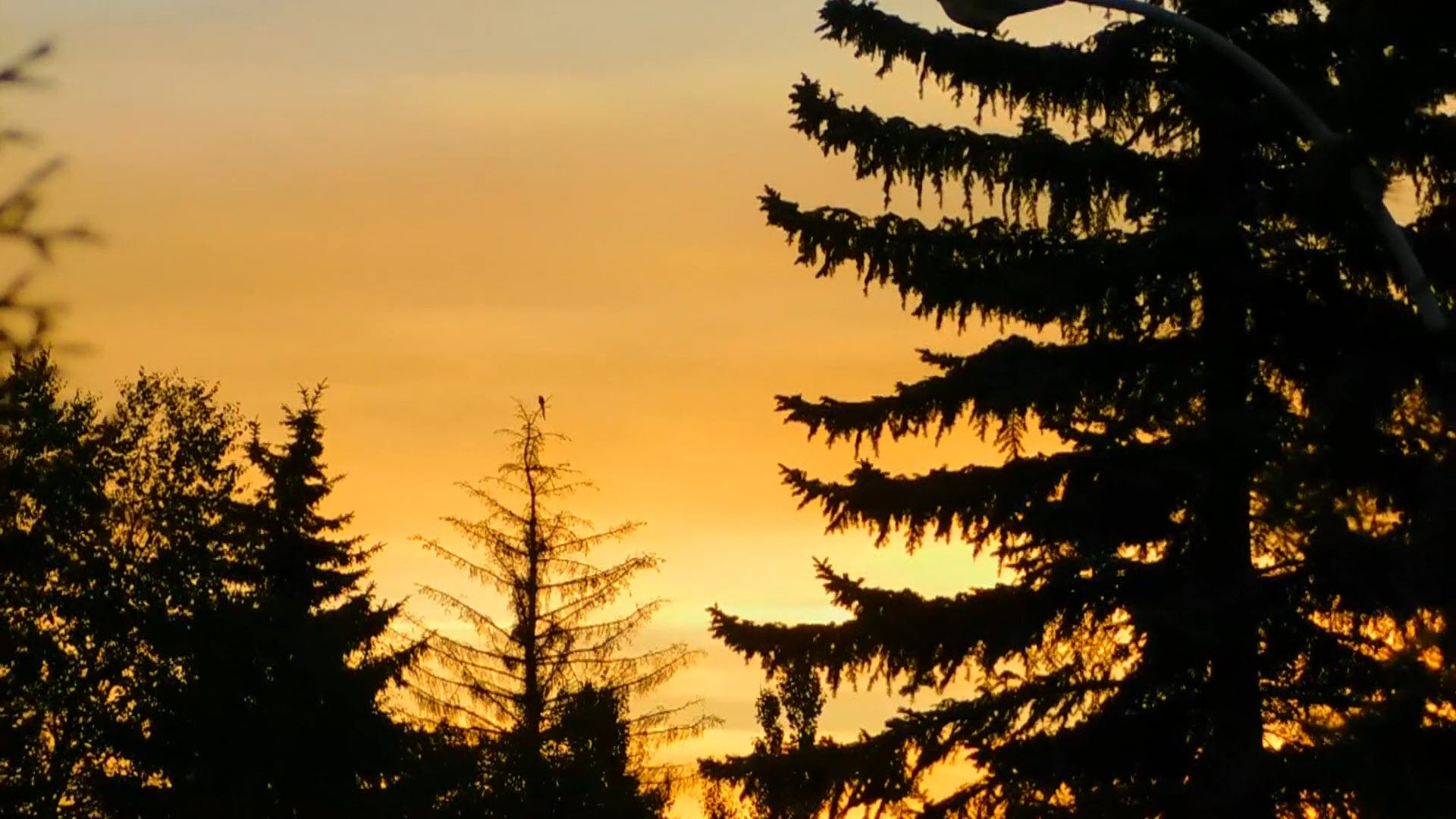 Golden Hour And Silhouette Of Trees