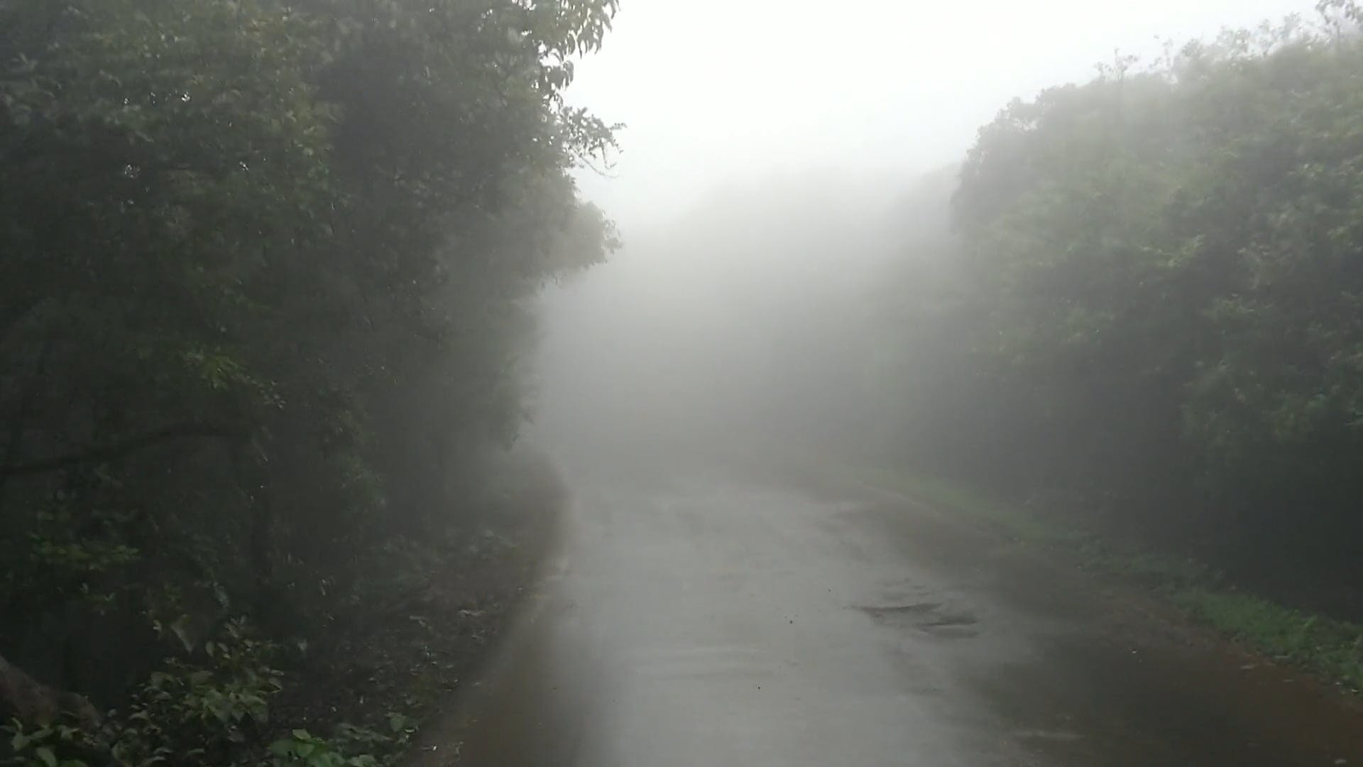 Driving Along A Foggy Road
