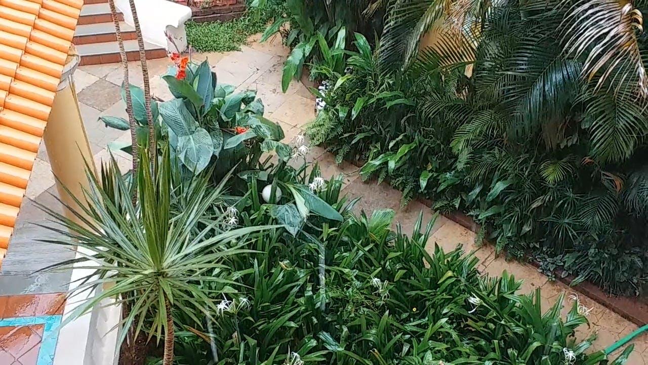 Ornamental Plants In A Garden
