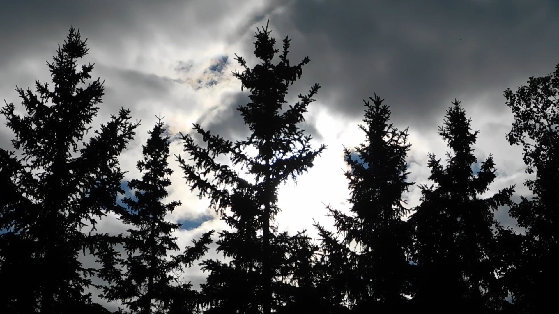 Trees And Clouds At Dusk