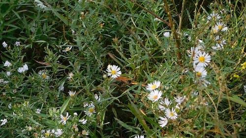 Wild Flowers Late Bloom