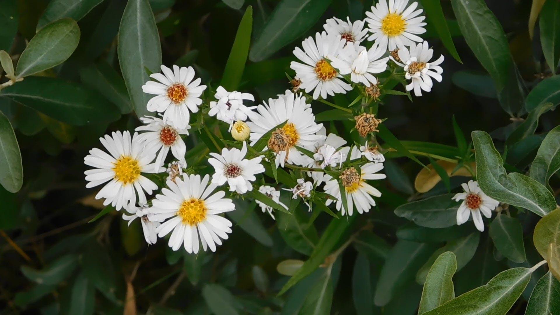 Beautiful White Wild Flowers