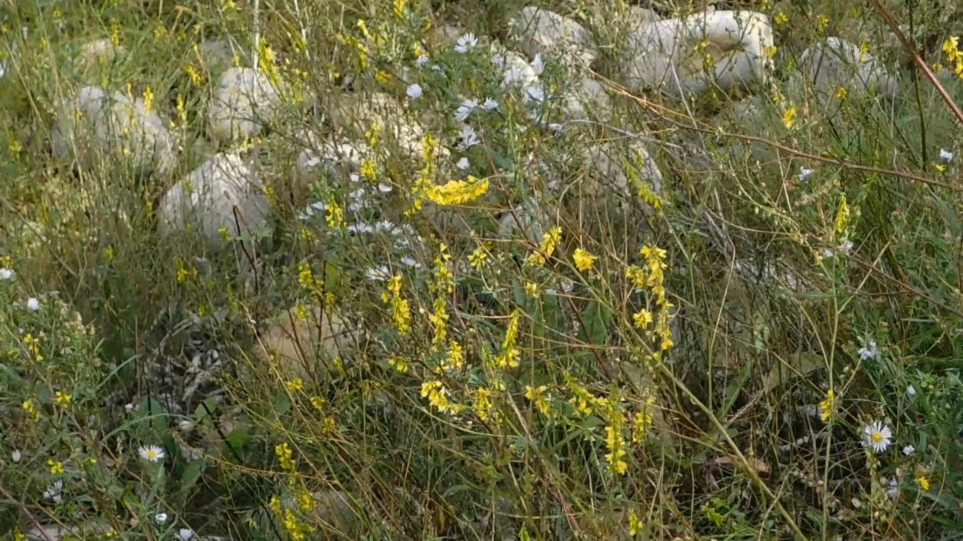 Prairies Wild Flowers