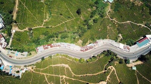 無人機視野的綠色的田野之間的一條路