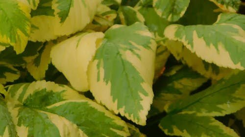 A Perennial Plant