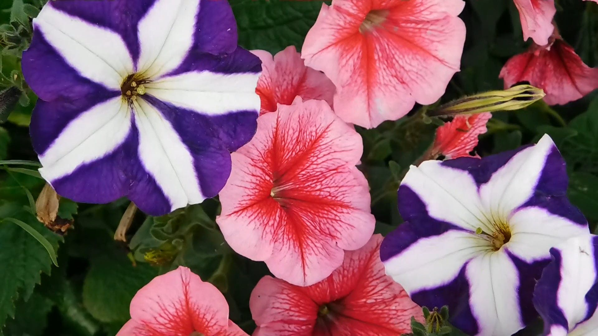Garden Mosaic Flowers