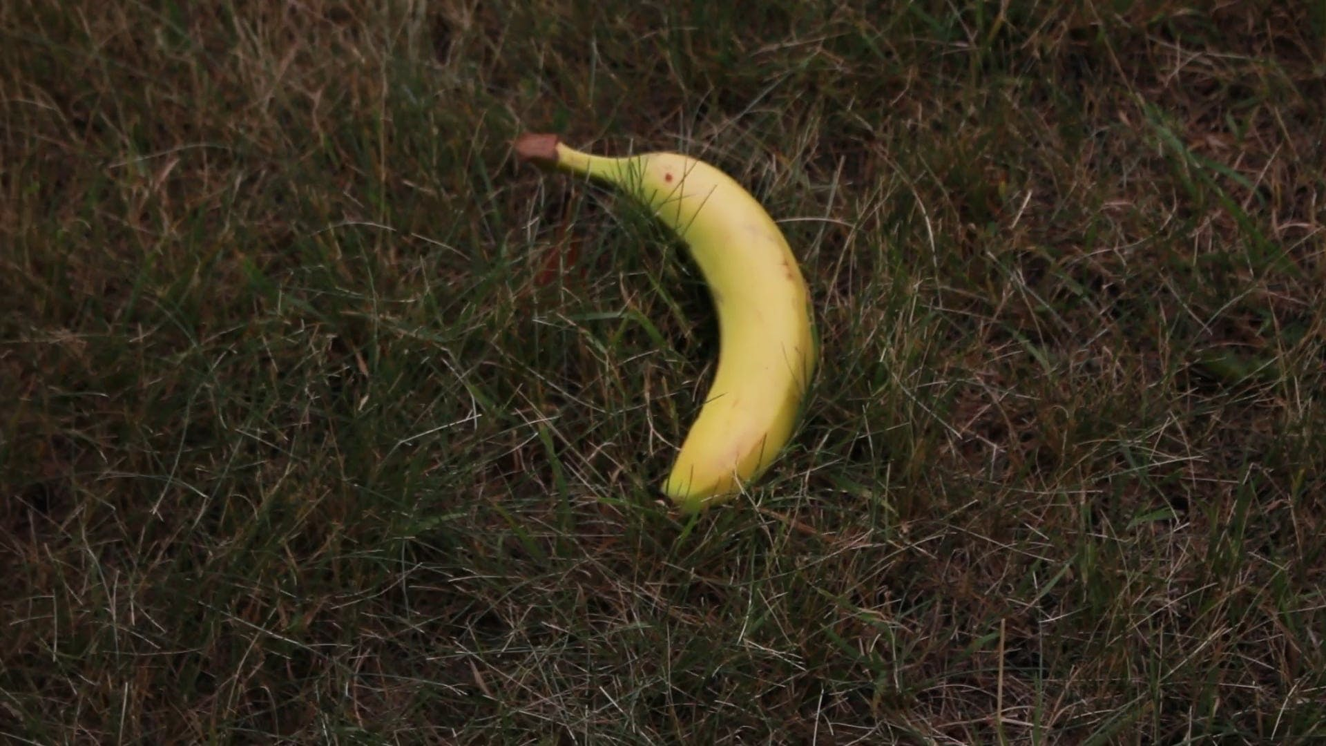 Banana On The Grass