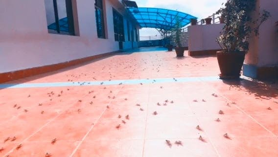 Swarm Of Insects On The Ground