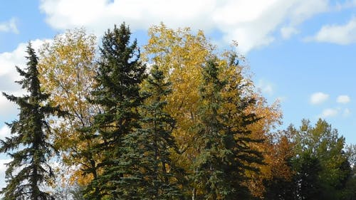 Trees In Golden Color
