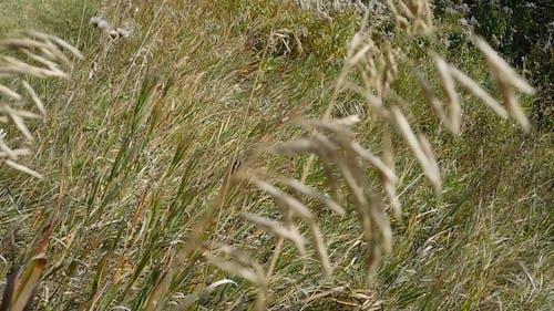 Prairies Ecosystems-Grasslands