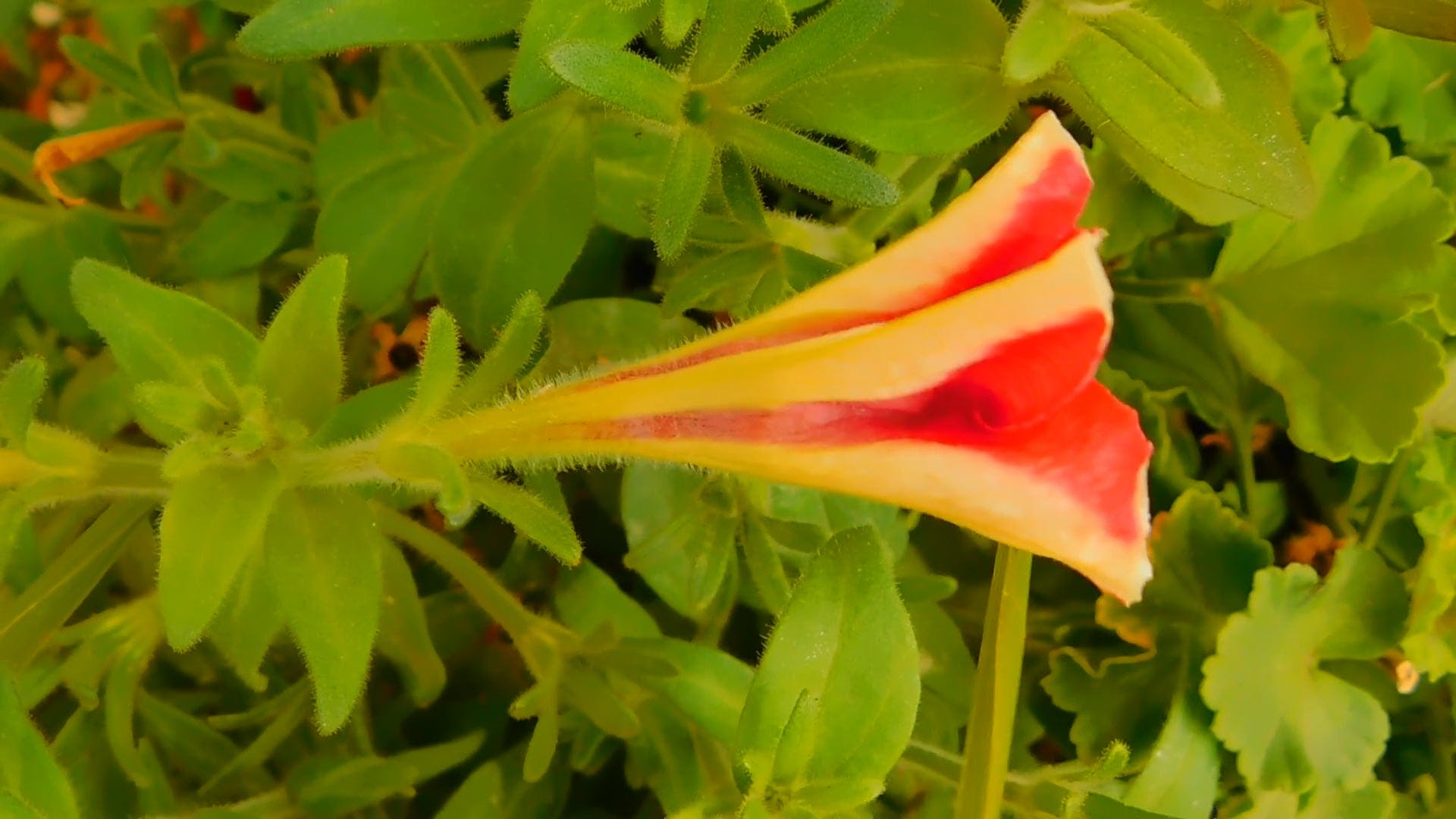 Flower Bud Shaking In The Wind