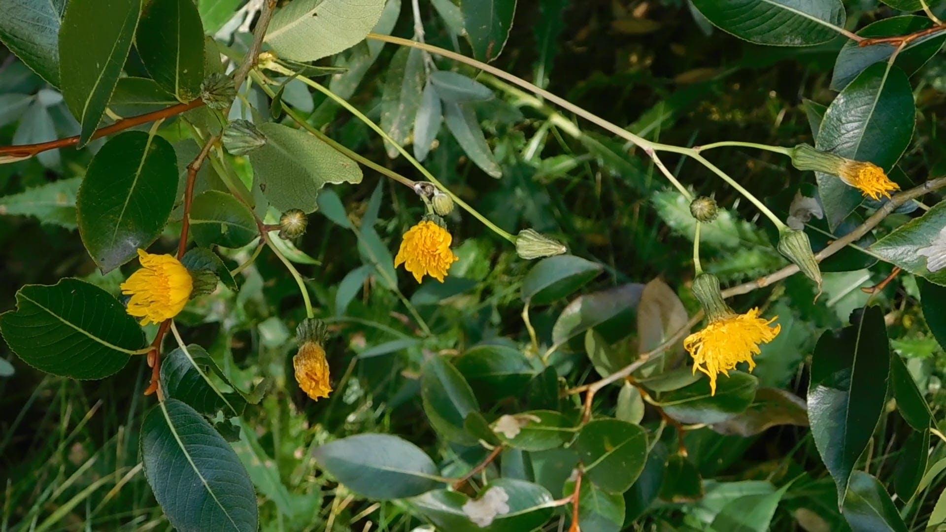 Wild Yellow Flowers Bloom
