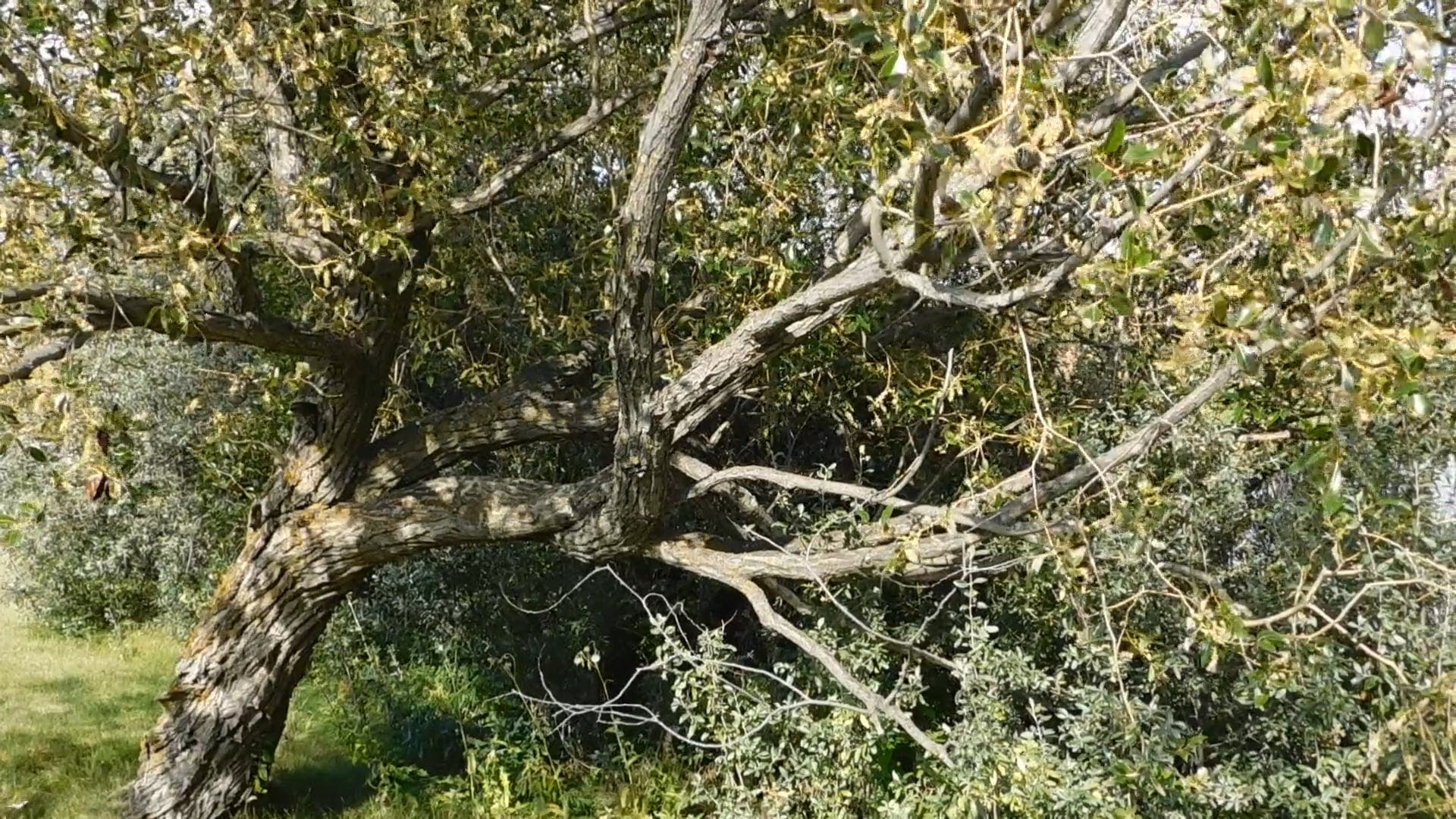 Video Of Tree