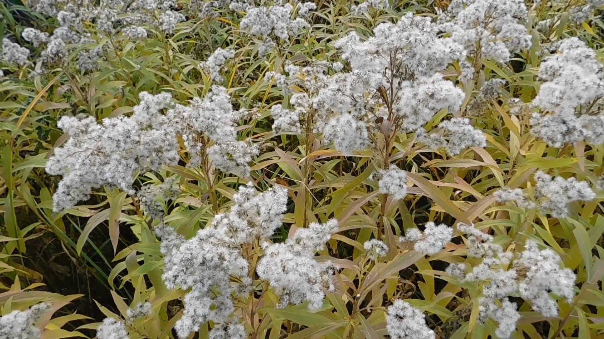 Grassland-Wild Flowers