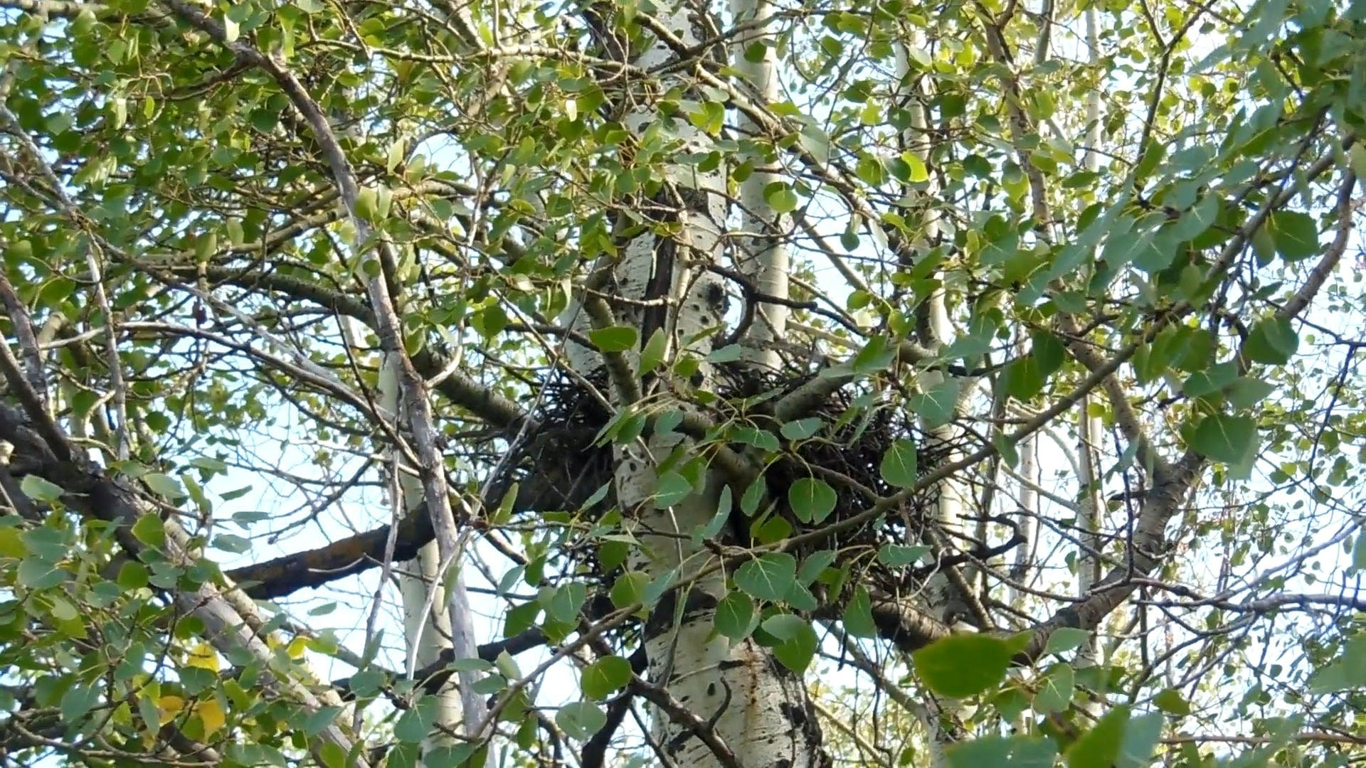 Close View Of A Nest In The Tree