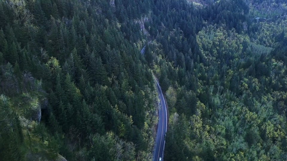 An Aerial View Of Coniferous Trees