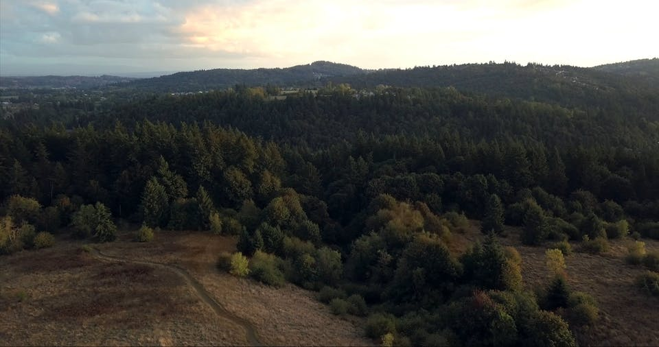 Drone View Of The Woods