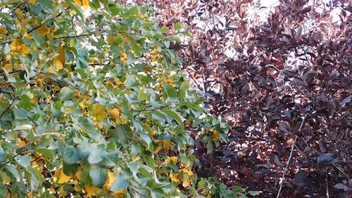 Amazing Colors Of Autumn
