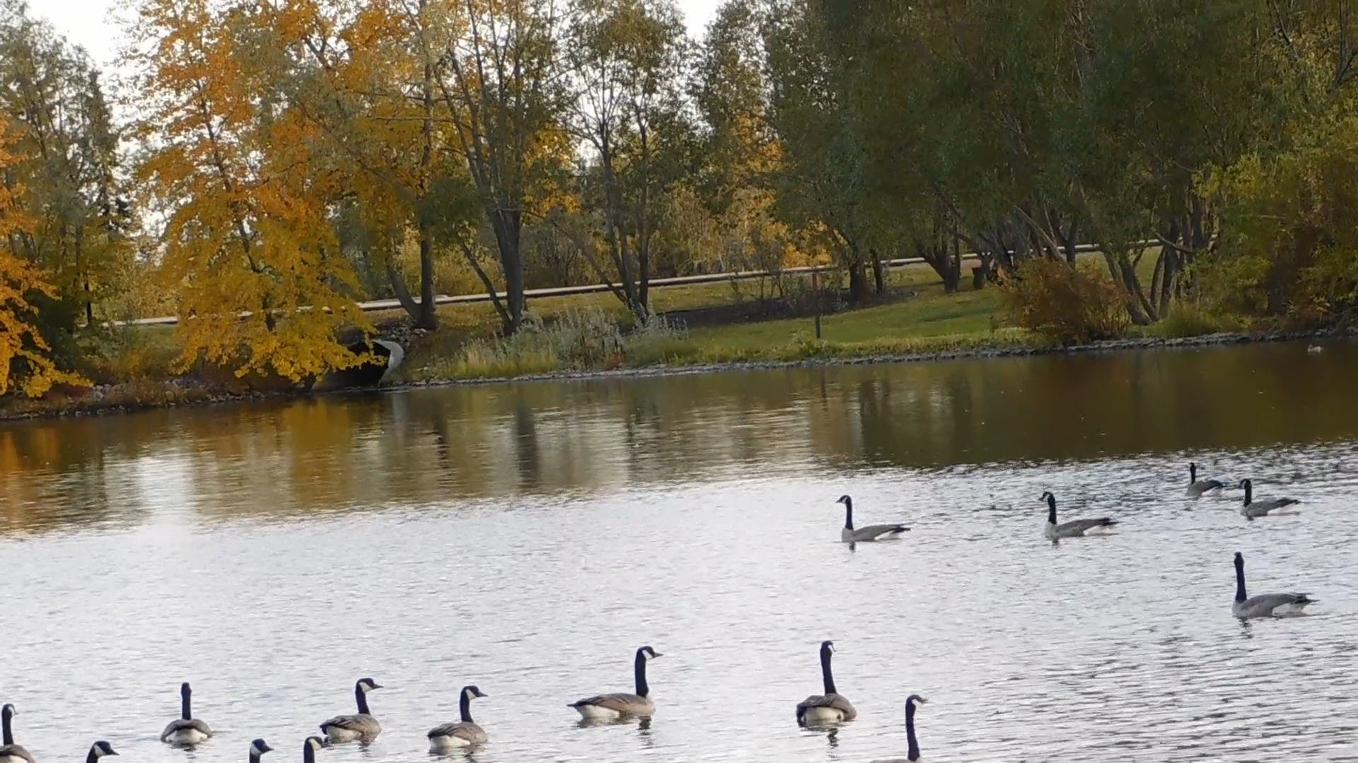Birds In Flight-And Ducks On Water