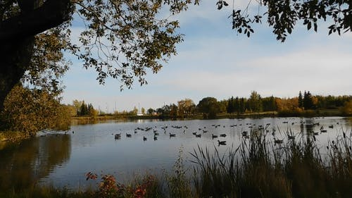 Autumnal Nature Views