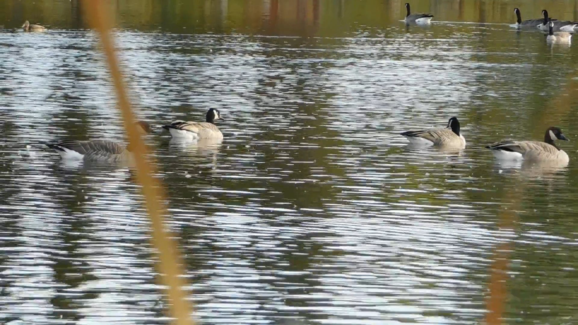 Beautiful Sight Of Ducks In The Lake