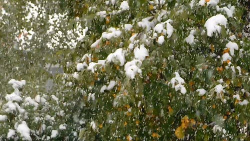 An Early Snow In September