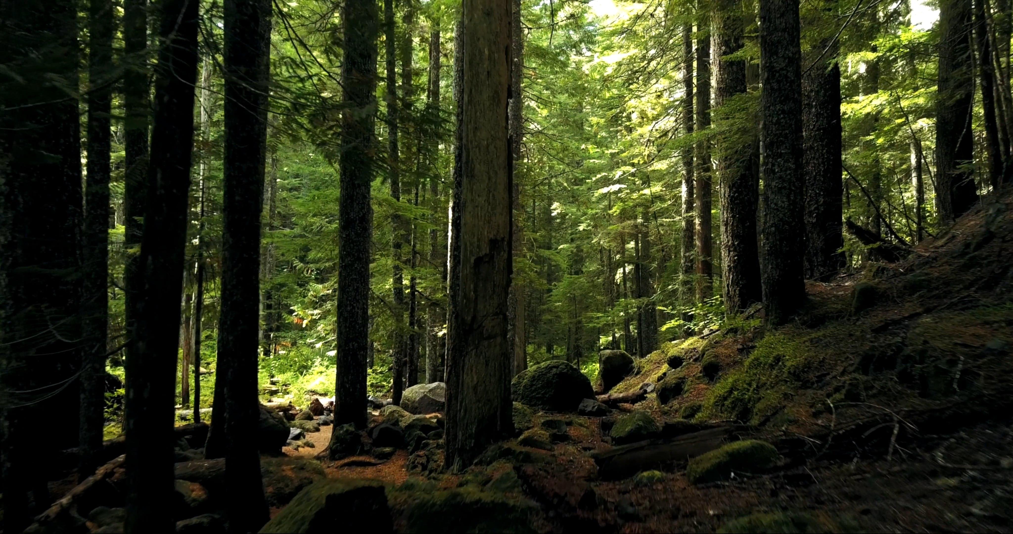 Free Nature Videos · Pexels