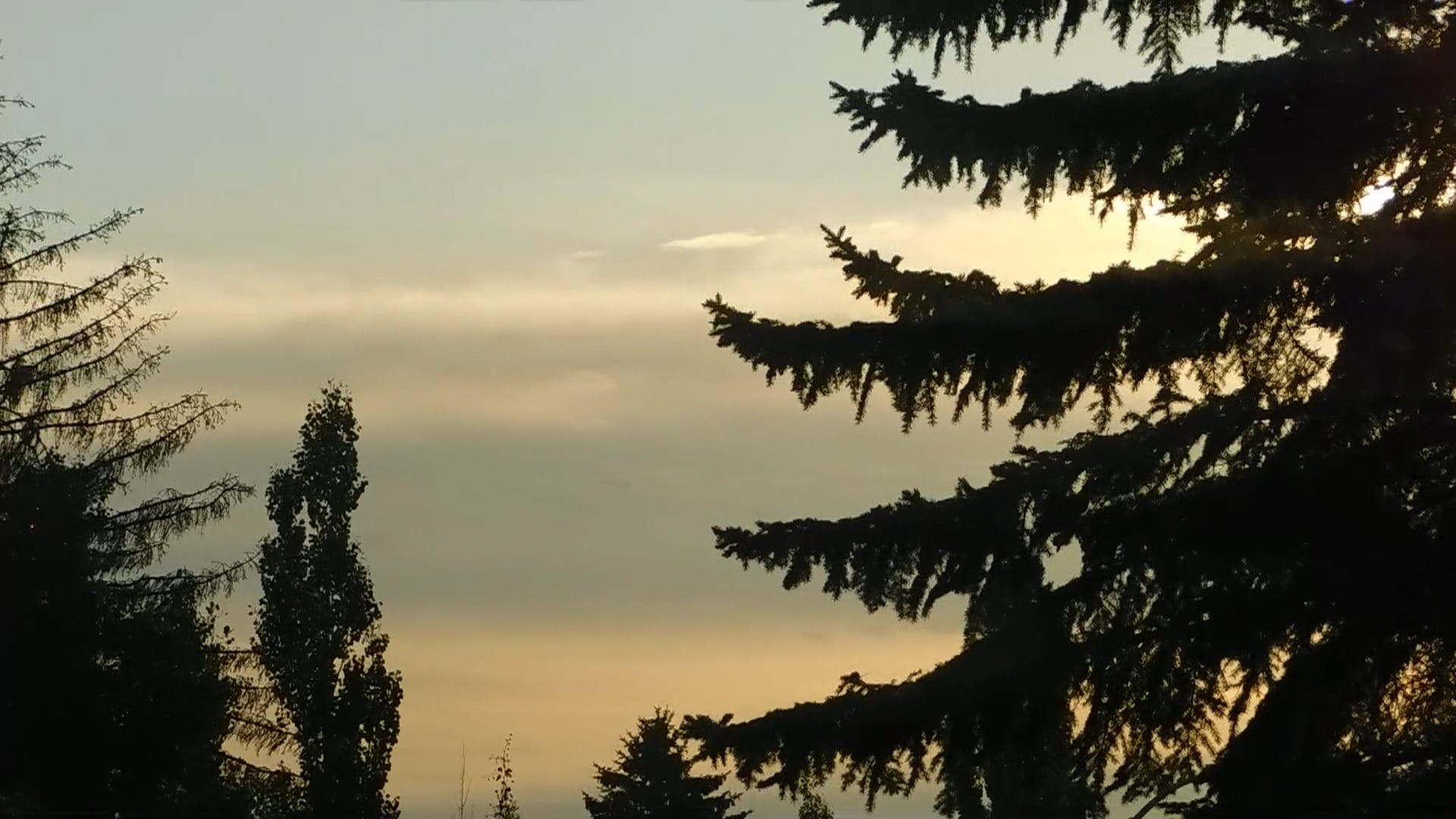 Silhouetted Trees During Sunrise