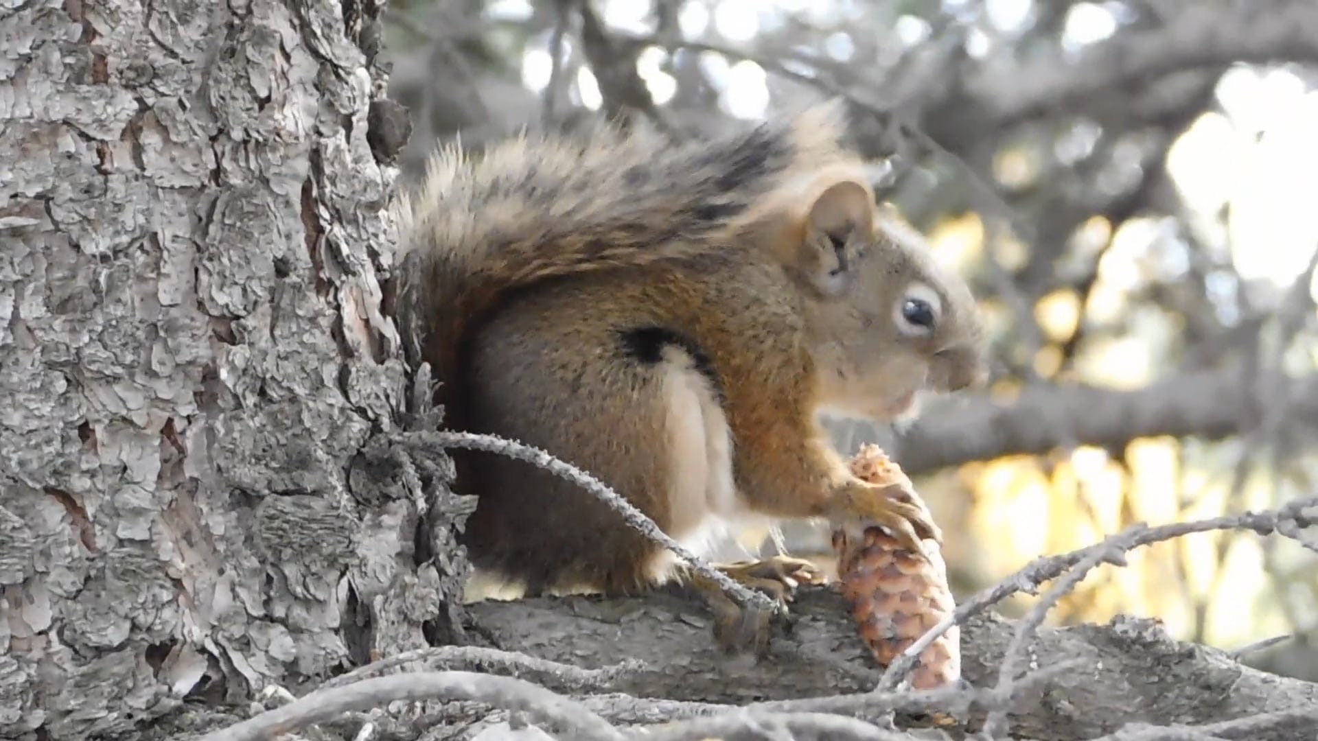 Squirrel Busy Eating Its Food