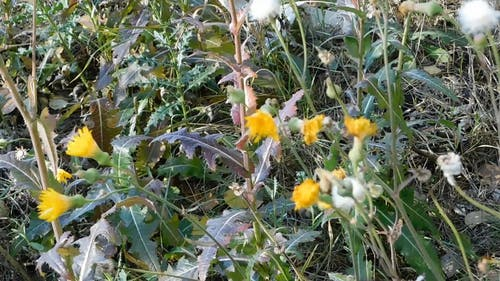 Variation Of Wild Flowers