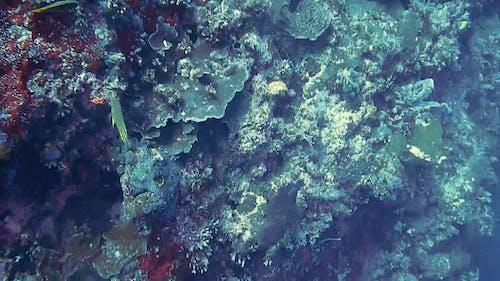 Video Of Aquatic Animals
