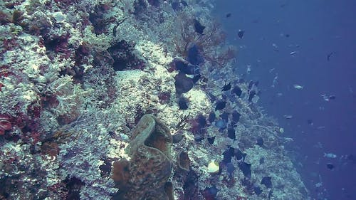 Variety Of Fishes Under The Deep Ocea