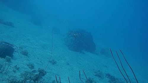 View Of An Octopus Underwater