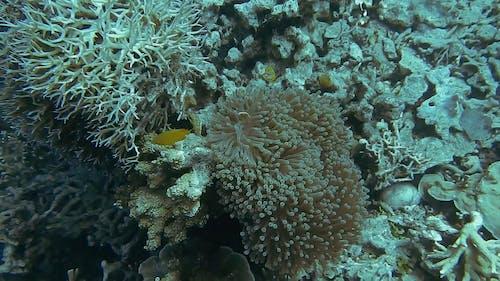 Video Of Underwater Creatures
