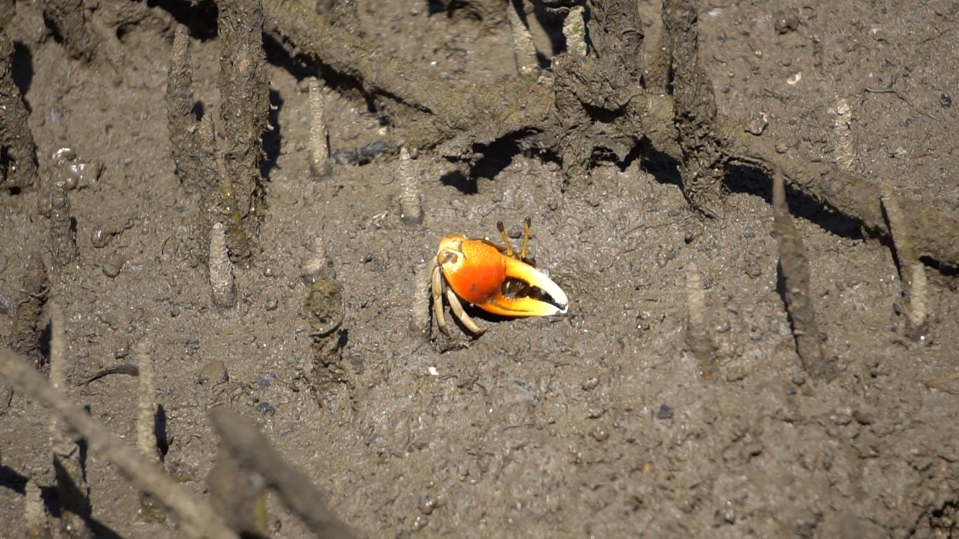 Crab Coming Out From Sand