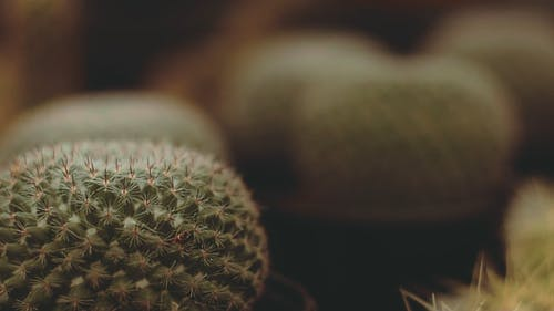 Selective Focus Video of Cactus