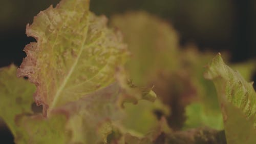 Fresh Leafy Vegetable