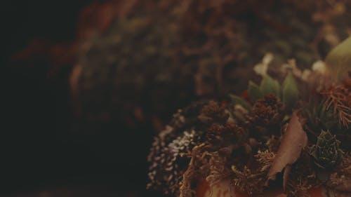 Close View Of A Succulent Plant