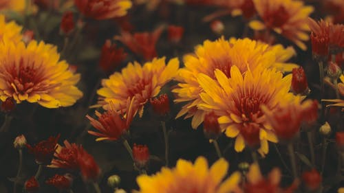Combination Of Red And Yellow Flowers
