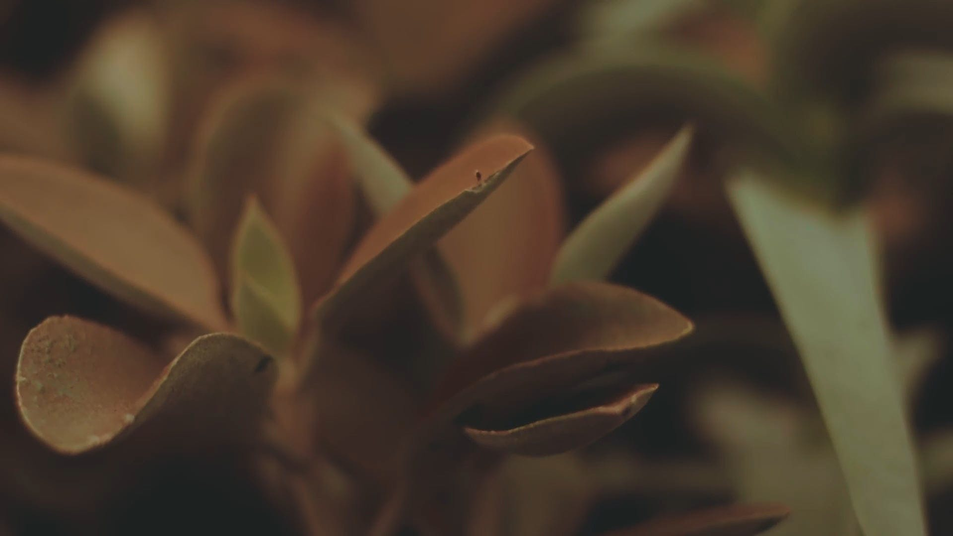 Close View Of Brown Succulent Plant