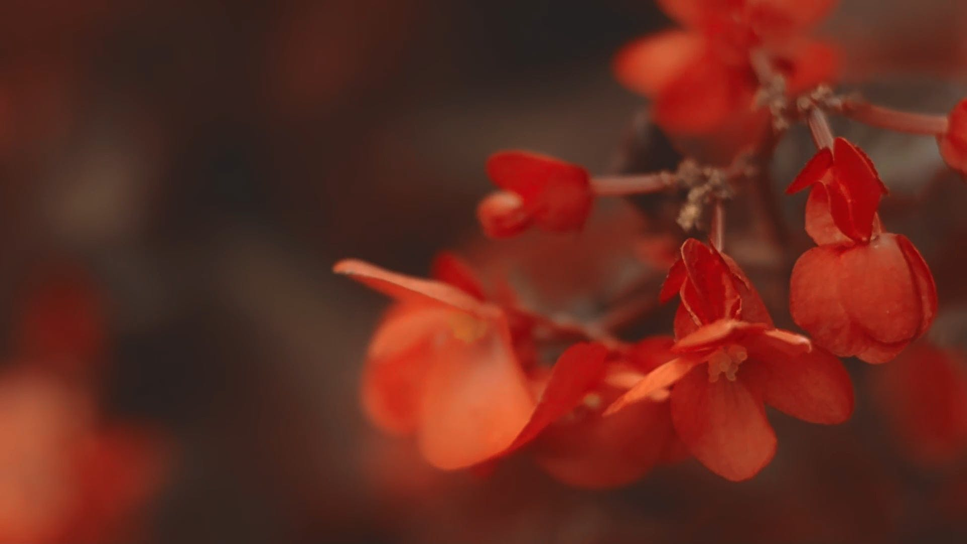 Red Petalled Flowers