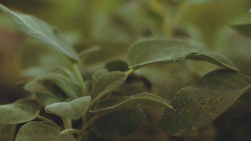 Close Up Widok Zielonych Liści