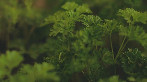 Close View Of Green Leaves