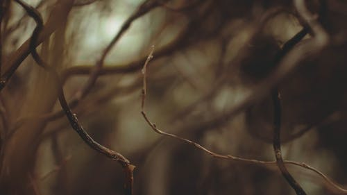 Twigs Of A Tree