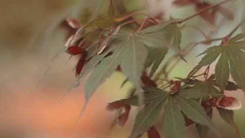Piękne Jesienne Liście