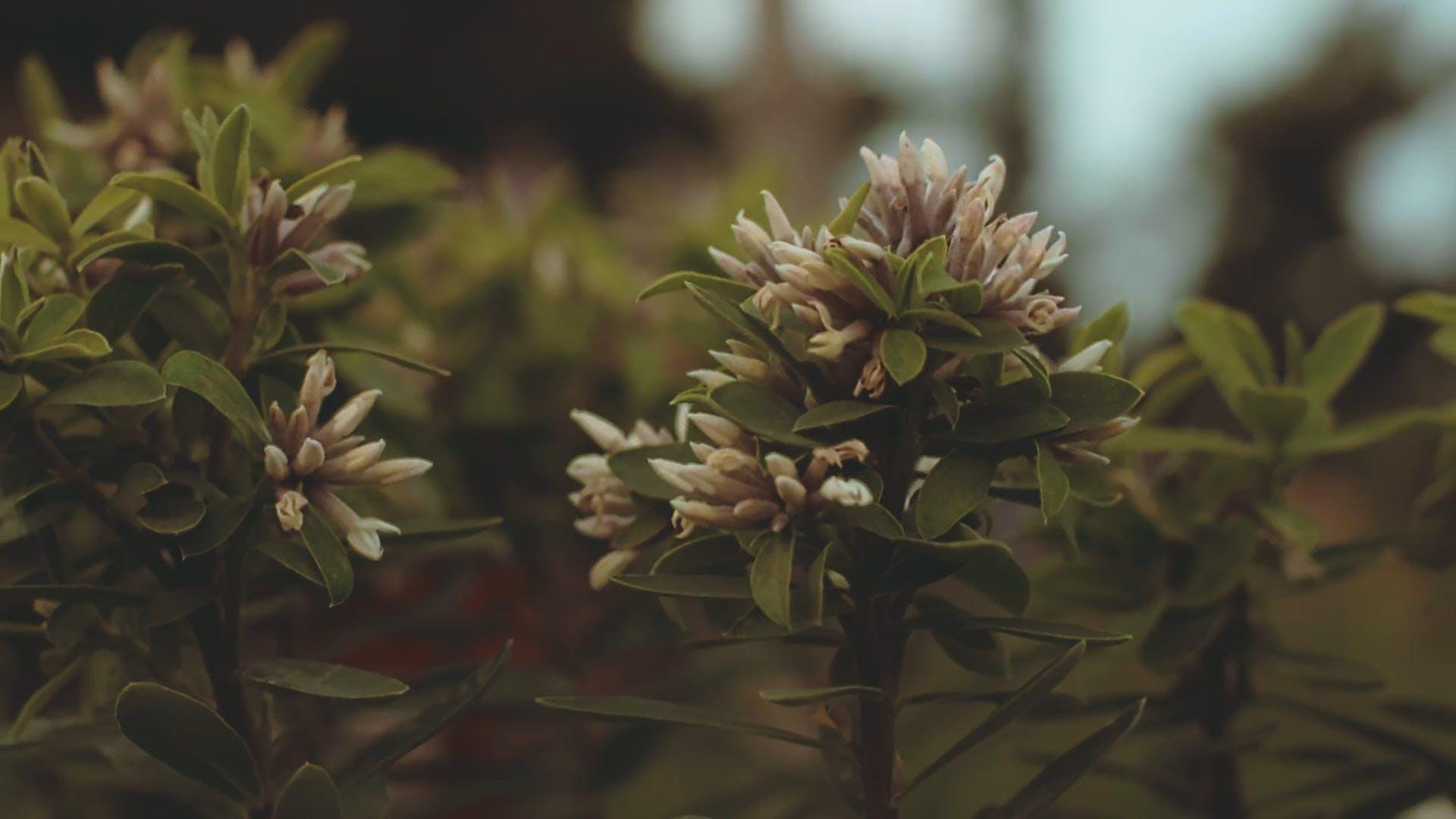 Beautiful Tiny Flowers