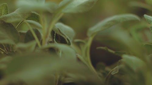 Video Od Green Plant