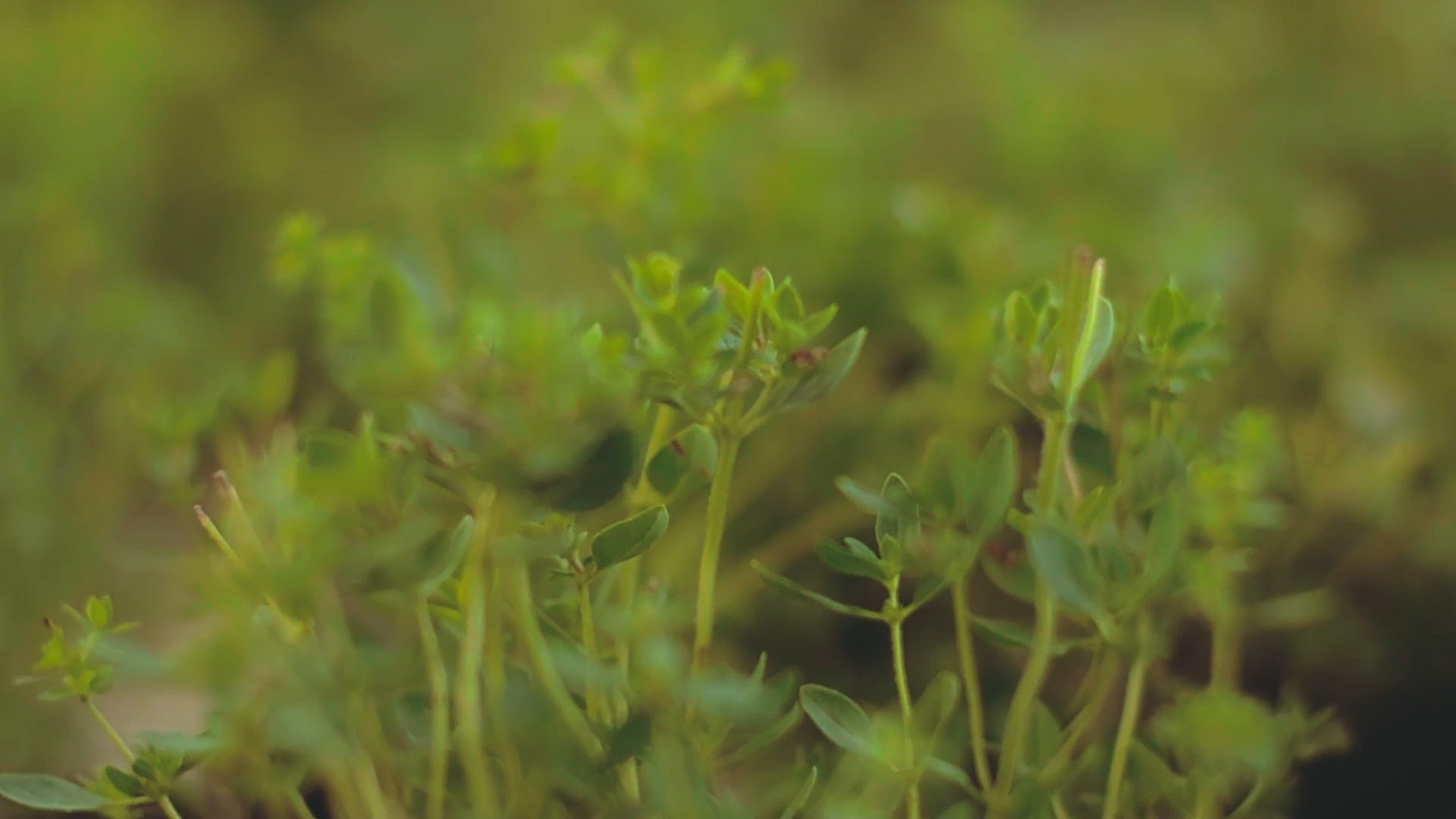 Video Of Green Plant