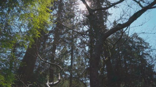 Video Of Tall Trees In The Park